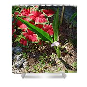 Canna Lily Shower Curtain