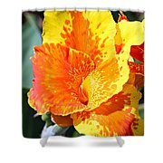 Cannas Shower Curtain