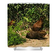 Capybara Shower Curtain