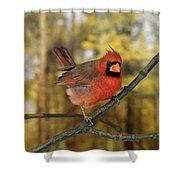 Cardinal Rouge Cardinalis Cardinalis Shower Curtain