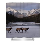 Elk Crossing, Banff National Park, Alberta Shower Curtain