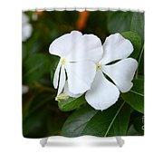 Catharanthus Roseus Shower Curtain