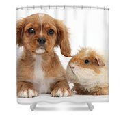 Cavalier King Charles Spaniel Pup Shower Curtain
