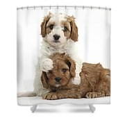 Cavapoo Puppies Hugging Shower Curtain