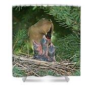 Cedar Waxwings Shower Curtain by Linda Freshwaters Arndt