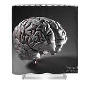 Cerebral Arteries Shower Curtain
