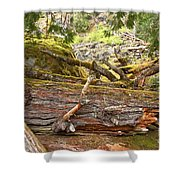 Cheakamus Rainforest Debris Shower Curtain