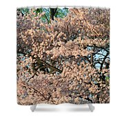 Cherry Blossoms In Pink And Brown Shower Curtain