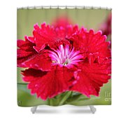 Cherry Dianthus From The Floral Lace Mix Shower Curtain
