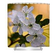 Cherry Flowers Shower Curtain