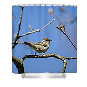 Chipping Sparrow Perched In A Tree Shower Curtain