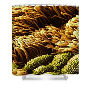 Cilia In Lung, Sem Shower Curtain