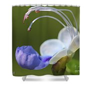 Clerodendrum Ugandense Or Blue Butterfly Bush Shower Curtain