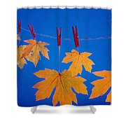 Close-up Of Fall Colored Maple Leaves Shower Curtain