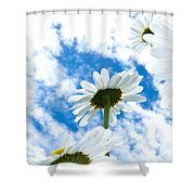 Close-up Shot Of White Daisy Flowers From Below Shower Curtain