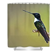 Collared Inca Shower Curtain