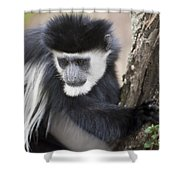 Colobus Monkey Shower Curtain