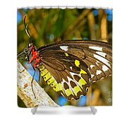 Common Birdwing Butterfly Shower Curtain