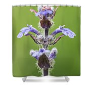Common Bugle Shower Curtain