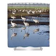 Common Crane Grus Grus Shower Curtain
