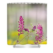 Common Fumitory Shower Curtain