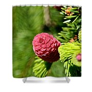 Cone Top Shower Curtain