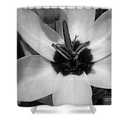 Corn Lily Named Giant Shower Curtain