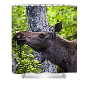 Cow Moose Shower Curtain