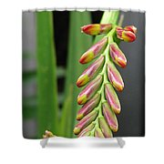 Crocosmia Named Lucifer Shower Curtain