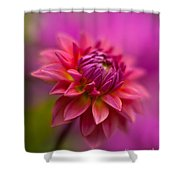 Dahlia Burst Shower Curtain