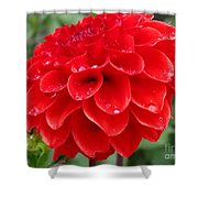 Dahlia Named Ali Oop Shower Curtain