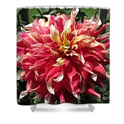 Dahlia Named Bodacious Shower Curtain