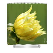 Dahlia Named Kelvin Floodlight Shower Curtain