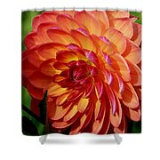 Dahlia Profile Shower Curtain
