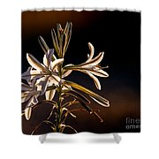 Desert Easter Lily Shower Curtain by Robert Bales