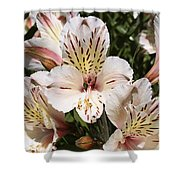 Desert Willow Shower Curtain
