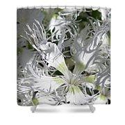 Dianthus Superbus - White Shower Curtain