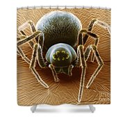 Dictynid Spider Shower Curtain by David M. Phillips