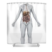 Digestive System Female Shower Curtain