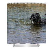 Dog Ball Water Shower Curtain