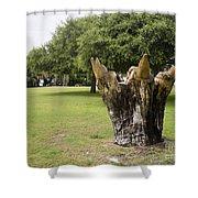 Dolphin Tree In Melbourne Beach Florida Shower Curtain by Allan  Hughes
