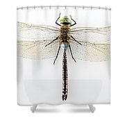 Dragonfly Isolated Shower Curtain