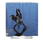 Drying Anhinga Shower Curtain