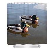 Ducks On Water Shower Curtain