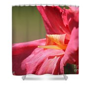 Dwarf Canna Lily Named Shining Pink Shower Curtain
