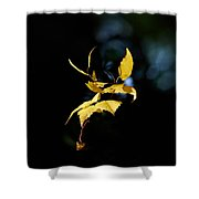 Early Fall Of  Downy Birch Shower Curtain