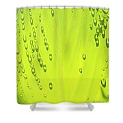 Early Morning Sunlight Shower Curtain