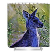 Eastern Grey Kangaroo Shower Curtain