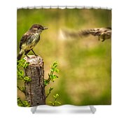 Eastern Phoebe Shower Curtain by Bob Orsillo