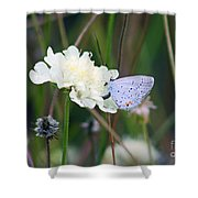 Eastern Tailed Blue Butterfly On Pincushion Flower Shower Curtain